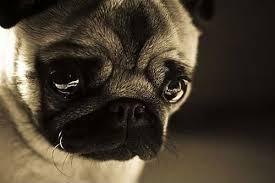 sad dog2